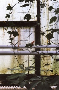 botanik2_klein